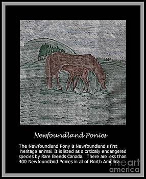 Barbara Griffin - Newfoundland Ponies - Heritage Animals