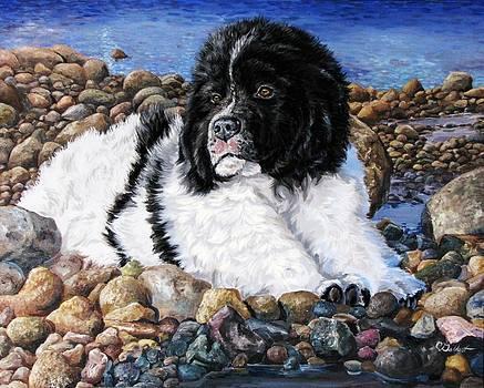 Newfoundland Puppy by Cassandra Gallant