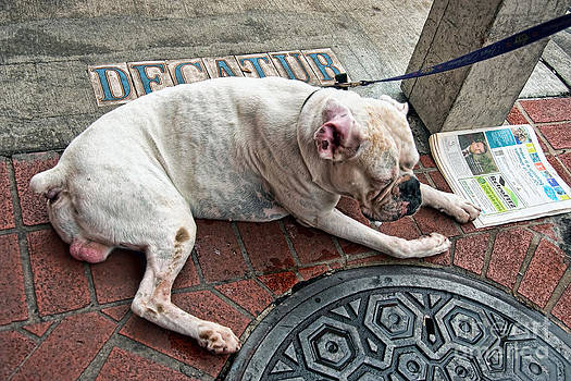 Kathleen K Parker - Newsworthy Dog in French Quarter
