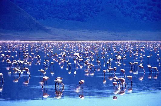 Joe Connors - Ngorongoro Splendor
