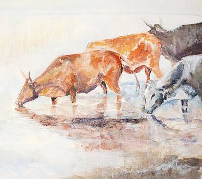Nguni Cattle by David  Hawkins