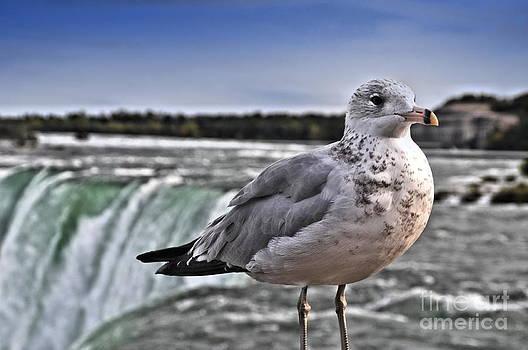 Niagara Falls by Andrea Kollo