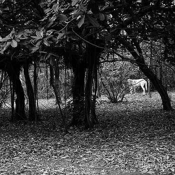 Nicaragua-fineart-23 by Javier Ferrando