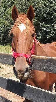 Nice Diamond Markings On Horse by Kathy Budd