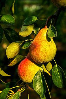 Matt Create - Nice Pears