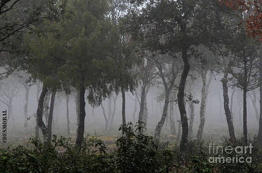 Niebla En El Bosque by Julia Moral