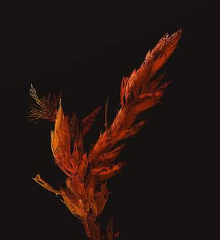 Night Bloom by Douglas Day Jones