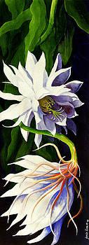 Night Blooming Cereus by Janis Grau
