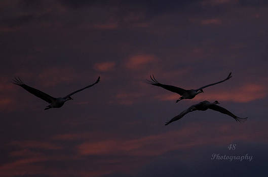 Night Cranes by Brian Manley