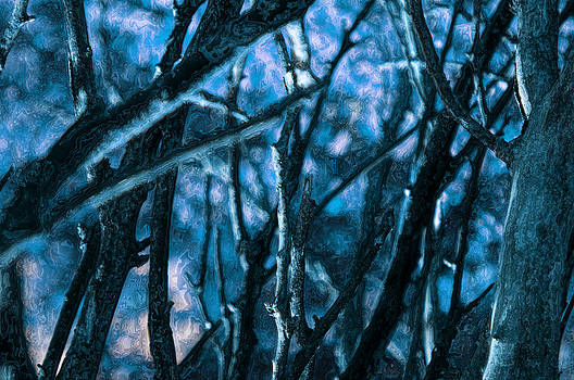 Night Forest by Anthony Vlach