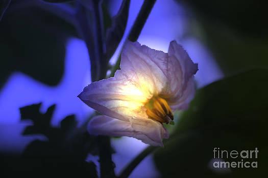 Night Light by Light Rapture