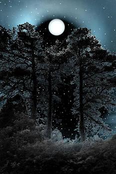 Nina Fosdick - Night Lights