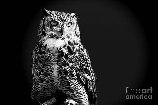 Night owl by Gry Thunes