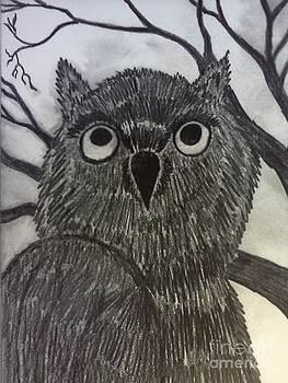 Night Owl by Neil Coffey