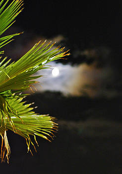 Night Scene by Sandra Kelly
