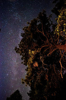 Night Sky in the Forest  by Floyd Raymer