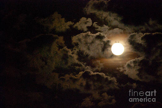 Night Sky by Robin Hassler