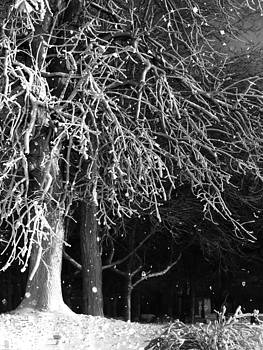 Gothicrow Images - Night Snow