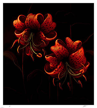 Night Tiger Lilies by Philip Slagter