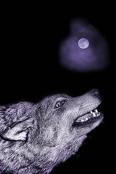 Night wolf by Angel Jesus De la Fuente