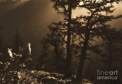 Nightfall In The High Alpine Region In Austria by Gerlinde Keating - Galleria GK Keating Associates Inc