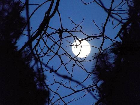 Nightlight by Gary Rathjen