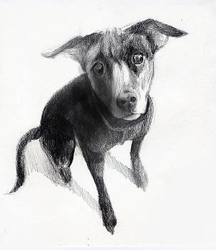 Nina Drawing Beautiful Dog by Neal Cormier