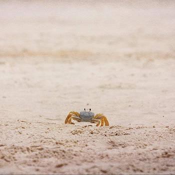 Judy Hall-Folde - Ninja Crab