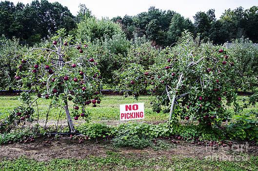 Paul Mashburn - No Apple Picking