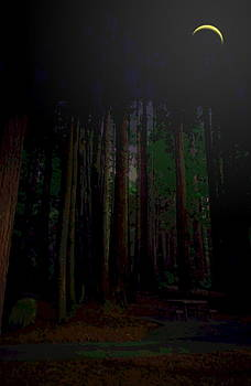 Joyce Dickens - No CA Redwoods Beauty At Night Two
