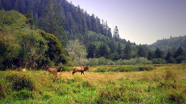 Joyce Dickens - No CA Roosevelt Elk