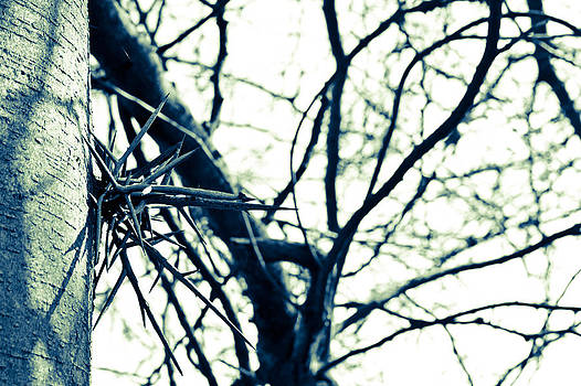 No Climbing Tree by Off The Beaten Path Photography - Andrew Alexander