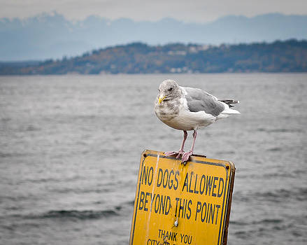 Ronda Broatch - No Dogs Allowed Beyond This Point