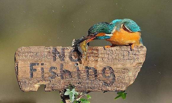 No Fishing by Janet Moss