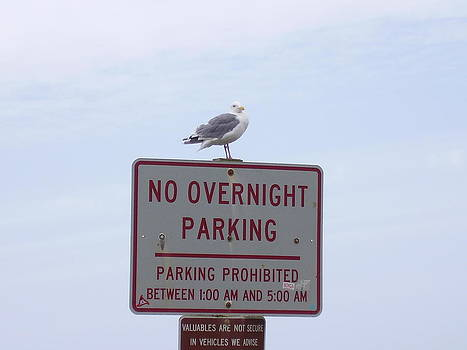 No Overnight Parking by Yvette Pichette