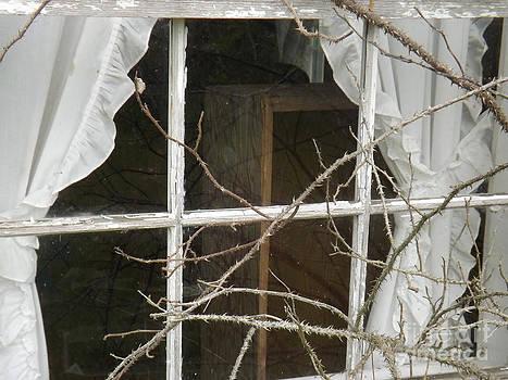 No Peeking says the Thorns by Brenda Brown
