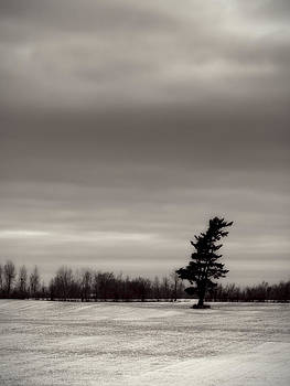 No tree is an island by Yves Pelletier