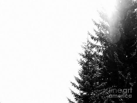 Noiseless by Anita Kovacevic