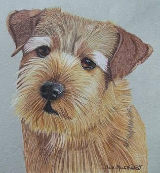Norfolk Terrier by Anita Putman
