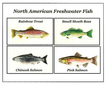 North American Freshwater Fish by Michael Vigliotti