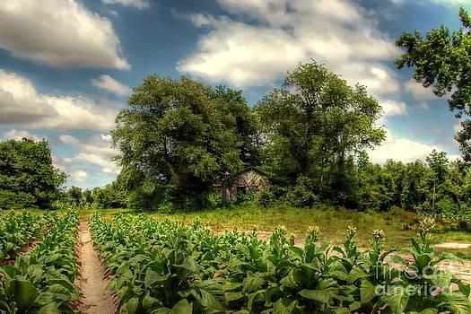North Carolina Tobacco Farm by Benanne Stiens
