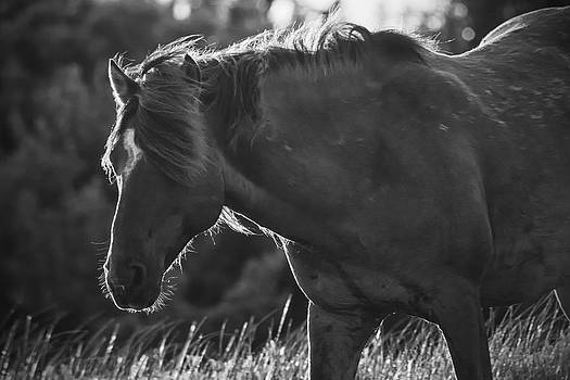 North Carolina Wild Horse by Bob Decker