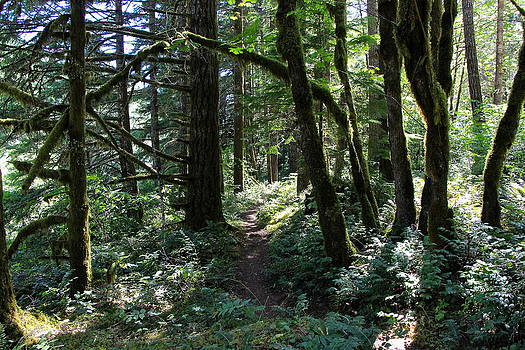 North Fork Trail by Tim Rice