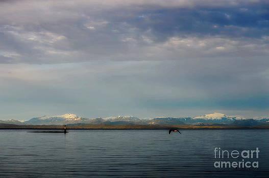 North Island by Gail Bridger