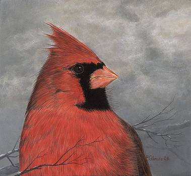 Northern Cardinal Study by Pat Gilmore