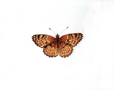 Northern Checkerspot Butterfly by Inger Hutton