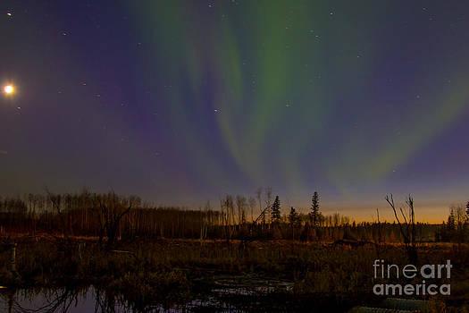 Alanna DPhoto - Northern Lights Trail