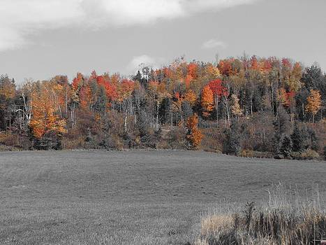 Northern Pastures by Jeanne LeMieux