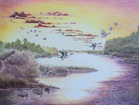 Gina Gahagan - Northern Pintails at Sunset