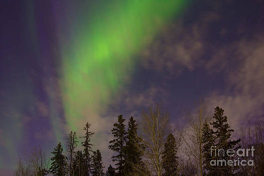 Alanna DPhoto - Northern Silhouette